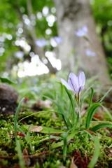 木陰の花韮