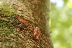 空蝉とキマダラカメムシ