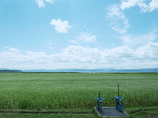風そよぐ猪苗代湖畔2