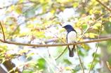 青い鳥 2