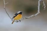 鳥さん専用の枝