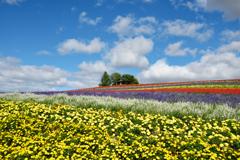 青空と花のじゅうたん