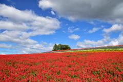 夏空と赤いじゅうたん