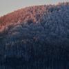早朝の霧氷の林