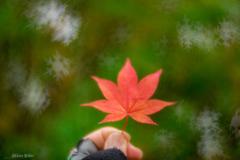 雪結晶舞う秋