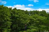 奥森の空中散歩