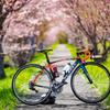 桜ロード♡