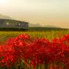 秋の北条鉄道