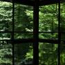 瑠璃光院 新緑 2