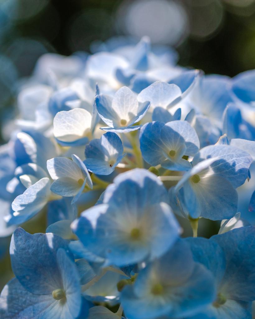 kodak blue