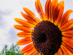 オレンジ太陽