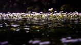 水上の花園