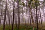 霧の霧ヶ峰