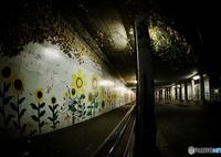 RICOH IMAGING PENTAX K-S2で撮影した(闇に咲く2)の写真(画像)