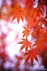 彩  -Winter-