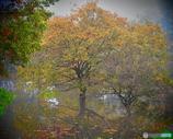 研究所の庭 -朝霧-