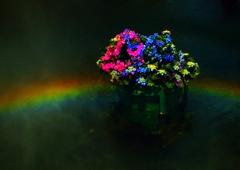 虹のリング