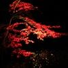 暗闇に浮かび上がる紅