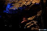 晩秋の宴 2