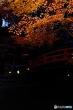 晩秋の宴 3