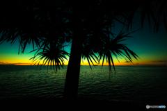 タコの木の夕暮れ