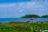 海辺に咲く