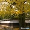 秋の旧細川刑部邸 1