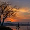 湖の朝霧 3