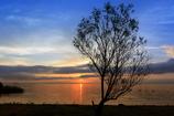 ☆この木なんの木、気になる木-03