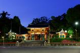 八坂神社の新緑