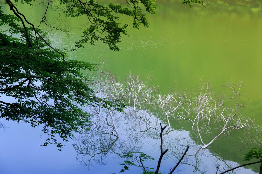 ☆十二湖の新緑