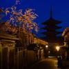 八坂桜-京の桜便り04