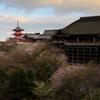 ☆清水桜--京の桜便り03