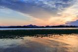 朝焼けのハス--琵琶湖の朝.03
