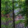 竹林の隙間から その2