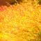 ☆♪ 燃える秋 ♪