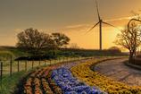 ☆花と風車