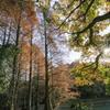 九大の森の秋の光