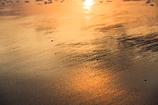 金色の浜辺