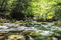 光が入る新緑の渓谷