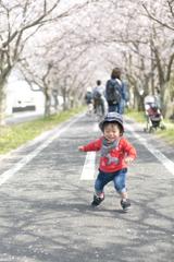 春のさくら散歩