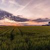 麦畑と朝の光