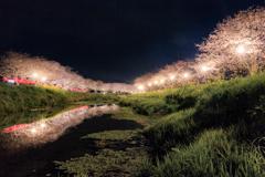 夜桜光小道