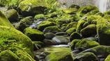 深緑の渓谷