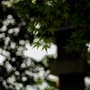 雨の井後神社