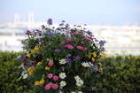 港に咲く花