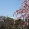 鯱鉾の花見