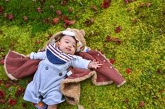 美しい苔の絨毯