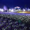 夜景 花畑