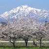 伯耆大山の春